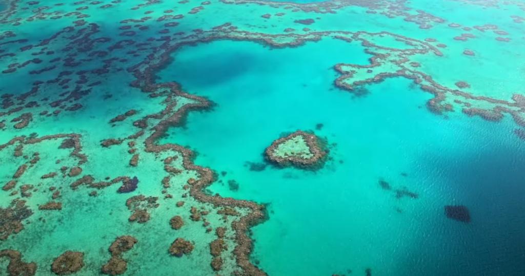 Arrecife de Coral Bay