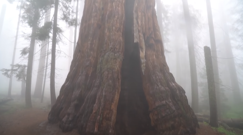 Parque Nacional Sequoia